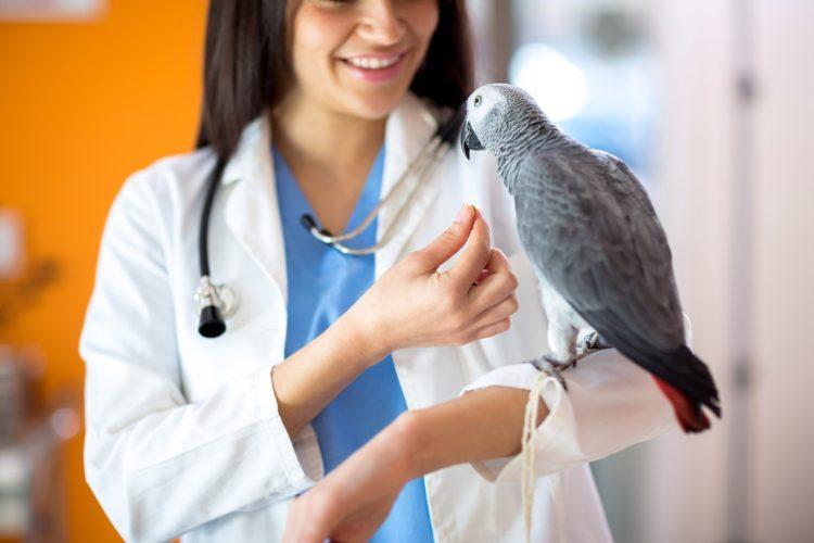 Amazon Parrot Health & Care